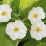 Skeleton flower fact